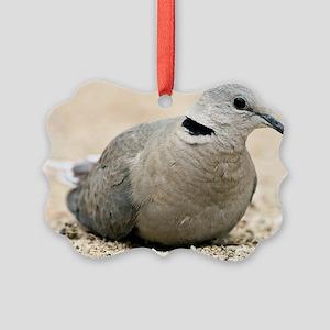 Cape turtle dove Picture Ornament