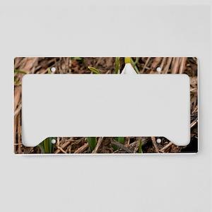 Caucasian Snowdrop (Galanthus License Plate Holder