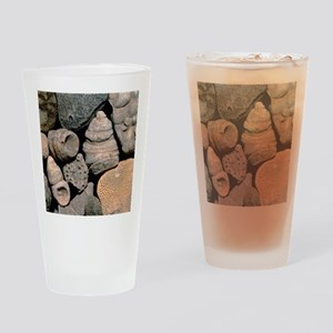 Assortment of fossils from the Silu Drinking Glass