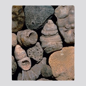 Assortment of fossils from the Silur Throw Blanket