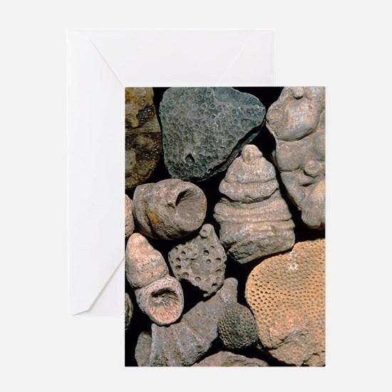 Assortment of fossils from the Silur Greeting Card