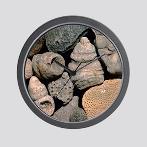 Assortment of fossils from the Silurian Wall Clock