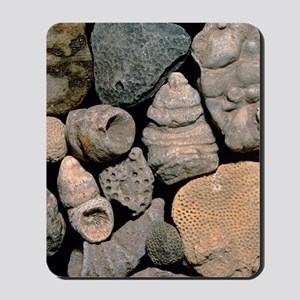 Assortment of fossils from the Silurian  Mousepad