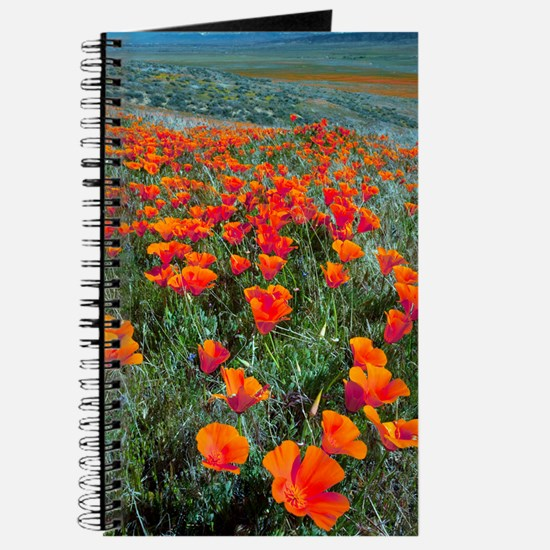 Californian Poppies (Eschscholzia) Journal