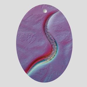 C. elegans worm, light micrograph Oval Ornament
