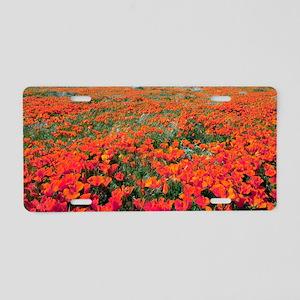 Californian Poppies (Eschsc Aluminum License Plate