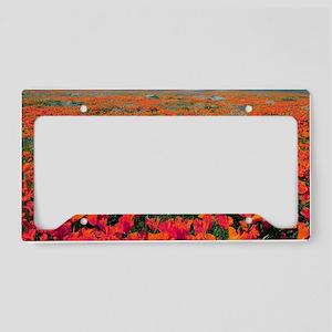 Californian Poppies (Eschscho License Plate Holder