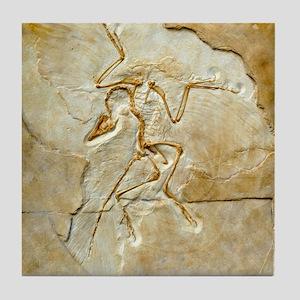 Archaeopteryx fossil, Berlin specimen Tile Coaster