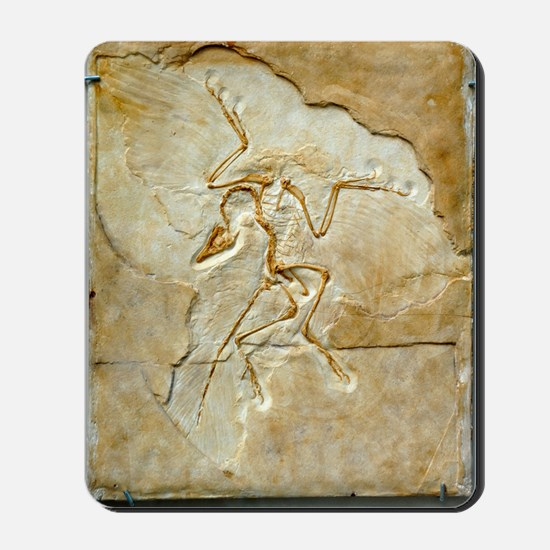 Archaeopteryx fossil, Berlin specimen Mousepad