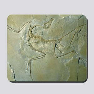 Archaeopteryx fossil Mousepad