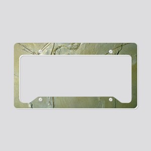 Archaeopteryx fossil License Plate Holder