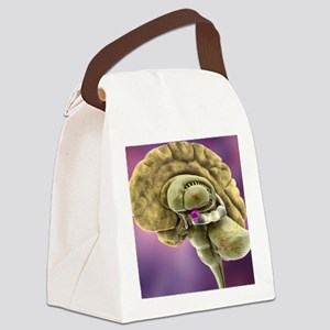 Brain anatomy, 3D artwork Canvas Lunch Bag
