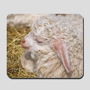 Angora goat kid Mousepad