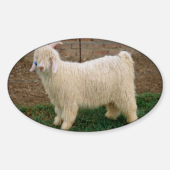 Angora goat Sticker (Oval)