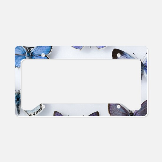 British large Blue butterfly  License Plate Holder