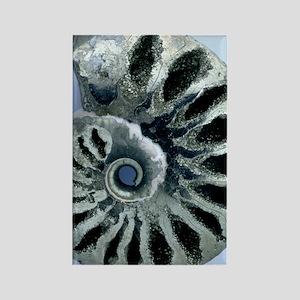 Ammonite fossil Rectangle Magnet