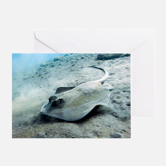 Bluespotted stingray Greeting Card