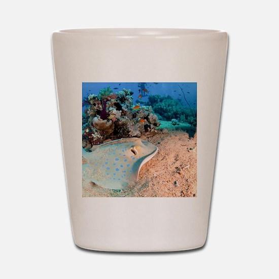 Blue-spotted stingray Shot Glass