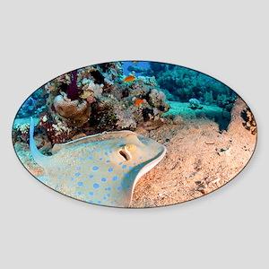 Blue-spotted stingray Sticker (Oval)