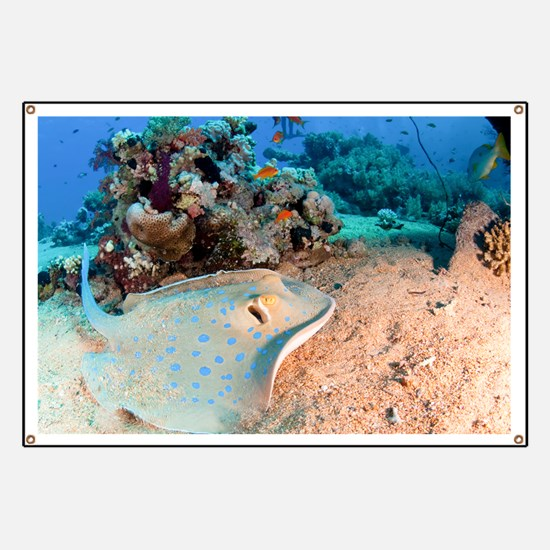 Blue-spotted stingray Banner