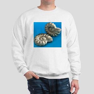 Ammonite fossils Sweatshirt