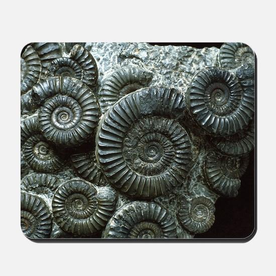 Ammonite fossils Mousepad