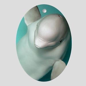 Beluga whale, Delphinapterus leucas Oval Ornament