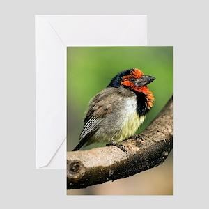 Black-collared barbet Greeting Card