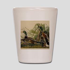 Mallard duck Audubon Bird Vintage Print Shot Glass