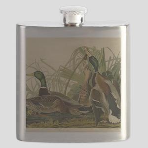 Mallard duck Audubon Bird Vintage Print Flask