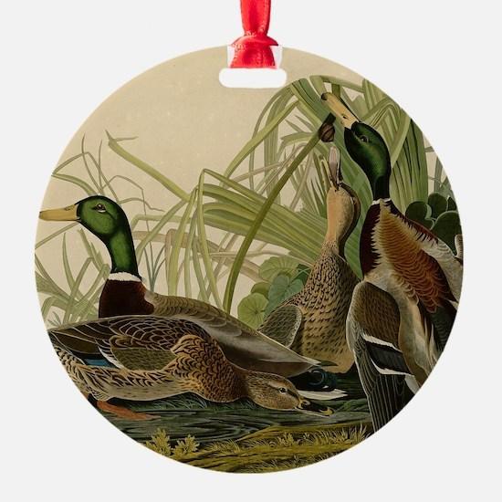 Mallard duck Audubon Bird Vintage P Ornament