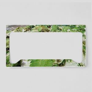 Algae covered rocks License Plate Holder