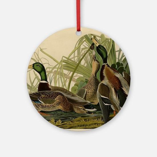 Mallard duck Audubon Bird Vintage P Round Ornament