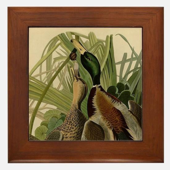Mallard duck Audubon Bird Vintage Prin Framed Tile