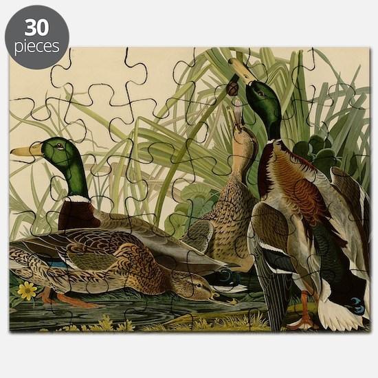 Mallard duck Audubon Bird Vintage Print Puzzle