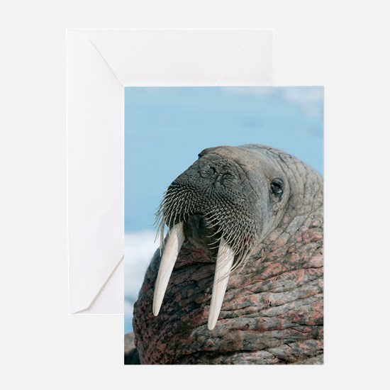 Atlantic walrus Greeting Card