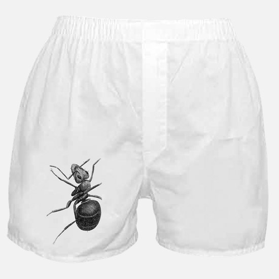Ant, 17th Century artwork Boxer Shorts