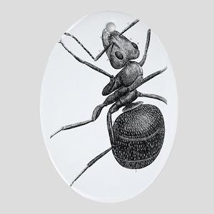 Ant, 17th Century artwork Oval Ornament