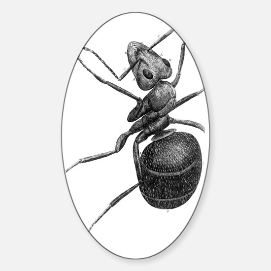 Ant, 17th Century artwork Sticker (Oval)