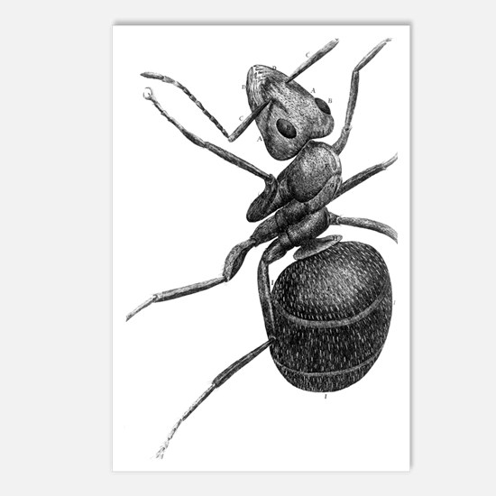 Ant, 17th Century artwork Postcards (Package of 8)