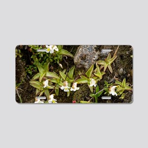 Alpine Butterwort (Pinguicu Aluminum License Plate
