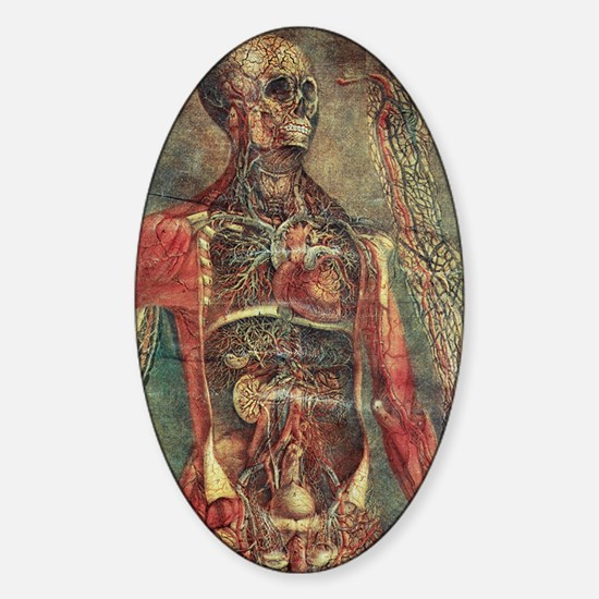 Anatomical model, 18th century Sticker (Oval)