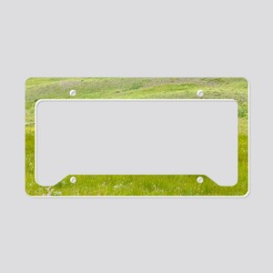 American bison, Canada License Plate Holder