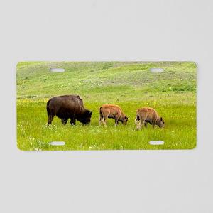 American bison, Canada Aluminum License Plate