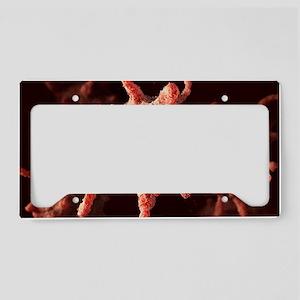 Activated platelets, artwork License Plate Holder