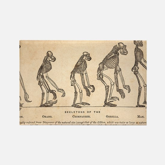 1863 Huxley from Ape to Man, age- Rectangle Magnet