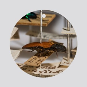 1840 click beetle ex Hope Westwood  Round Ornament