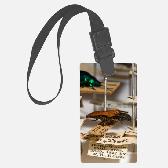 1840 click beetle ex Hope Westwo Luggage Tag