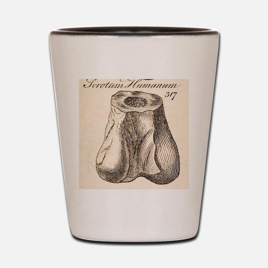 1763 Dinosaur bone misidentified scrotu Shot Glass