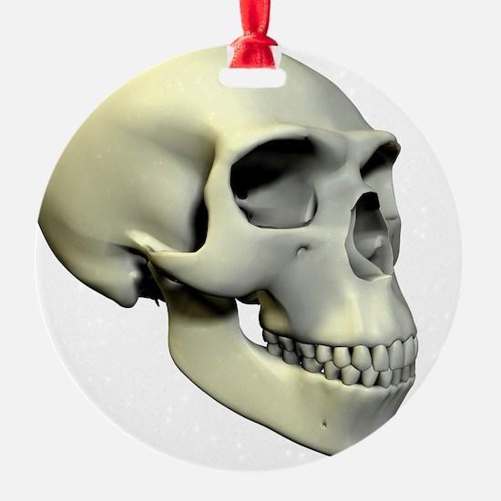 Neanderthal skull Ornament